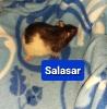 Bock Salasar