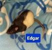 Kastrat Edgar
